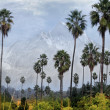 Palm trees and mountain — Stock Photo #8511277