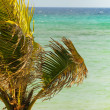 Palm tree in wind — Stockfoto