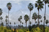 Palm trees and mountain — Stock Photo