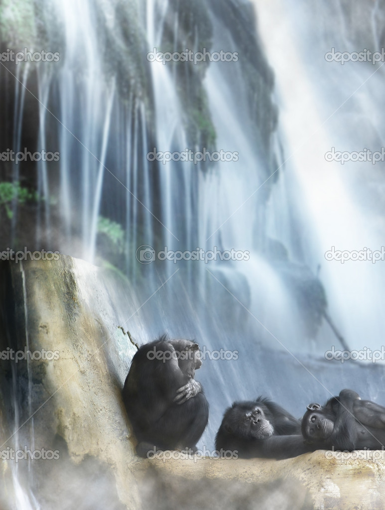 Group of 3 monkeys resting on top of rocks in front of powerful waterfall — Stock Photo #9393329