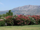 Split in Kroatien - Blick auf das Küstengebirge — Stock Photo