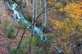 Ormanda çayı — Stok fotoğraf