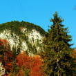Stock Photo: Conifer mountains and forests