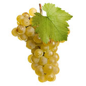 Fresh bunch of white wine on a white background — Stock Photo