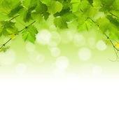 Massa gröna vine lämnar — Stockfoto