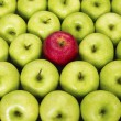Red and green apples - Stock Photo