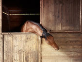 Riding school: horse looking out of stable — Stock Photo