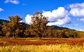 Sakhalin autumn. — Stock Photo