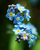 Summer flowers. — Stock Photo