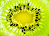 The structure of the kiwi. — Stock Photo