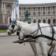 Stock Photo: Traditional horse coach Fiaker in Vienna.