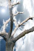 Spiritual Tree — Stock Photo