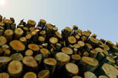 Large woodpile — Stock Photo