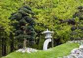 Bonsai trees in japanese garden — Stock Photo
