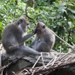 ������, ������: Wild monkey