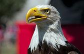 предупреждение орел смотрит — Стоковое фото