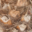 Coconut tree bark - 