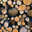 Logs in close up — Stock Photo