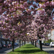 Springtime in town — Stock Photo