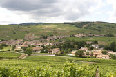 Vineyards in Burgendy region — Stock Photo