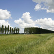 Dutch landscape — Stock Photo #10217237