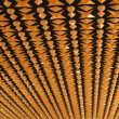 Fifties designed ceiling — Stock Photo