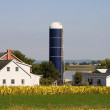 Amish farm — Stock Photo