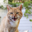 Angry cat — Stock Photo