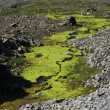 Rough glacier landscape with moss — Foto Stock