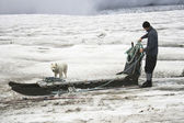 Dogsledding — Stock Photo