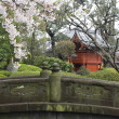 Cherry blossom in Japanese garden - Stock Photo