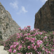 Oleander bush in Greek gorge — Stock Photo