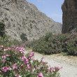 Oleander in Cretan canyon — Stock Photo