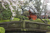 Cherry blossom in Japanese garden — Stock Photo