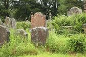 Tombstones in grass — Stock Photo