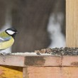 Titmouse on a feeding trough. — Stock Photo #10240817