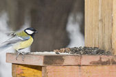 Titmouse on a feeding trough. — Stock Photo