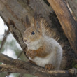 The squirrel — Lizenzfreies Foto
