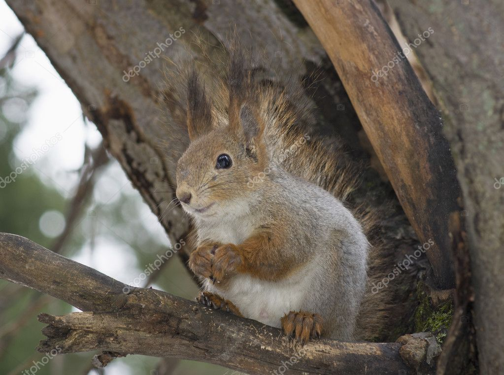 The squirrel — Stock Photo #8418054