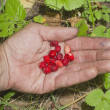 Wild strawberry on a hand. — Stock Photo