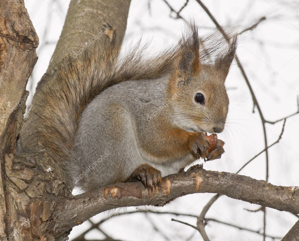 Squirrel — Stock Photo #8588290