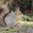 Stock Photo: The squirrel