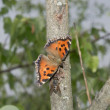The butterfly on a tree trunk. — Stock Photo