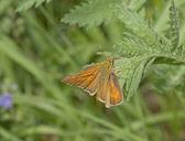 Butterflies — Stock fotografie