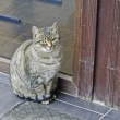 Cat at a door. - Stock Photo