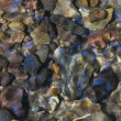 Stock Photo: Stones at bottom of stream.
