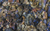 Stones at the bottom of a stream. — Stock Photo