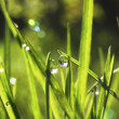 Dew on a grass. — Stock Photo
