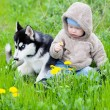 Child with puppy husky — Stock Photo #10210028