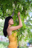 Girl near blossom acacia tree — Stock Photo